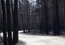 Огонь нанес непоправимый урон памятникам природы - Джабык-Карагайскому бору и Анненскому заказнику