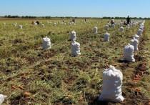 Крымские аграрии собрали более 13 тыс. тонн овощей, а также 758 тыс. тонн зерновых и зернобобовых культур