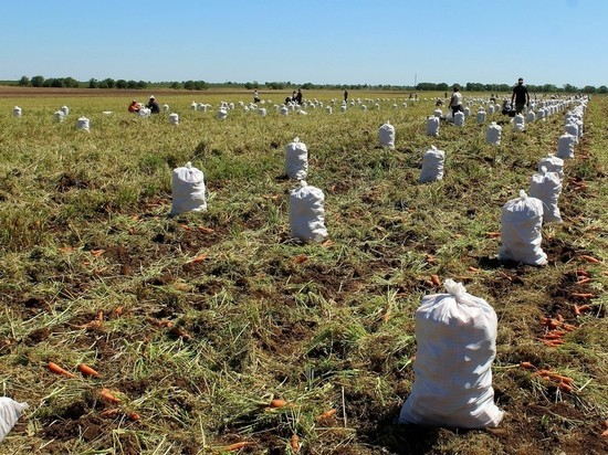 Битва за урожай: Крым без овощей не останется