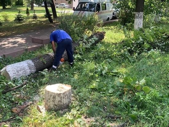 В Курске сильный ветер повалил 17 деревьев за сутки
