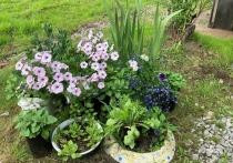 О том, какие цветы лучше всего приживаются на хабаровских дачах, не требуют особенного ухода и условий - в материале «МК в Хабаровске»