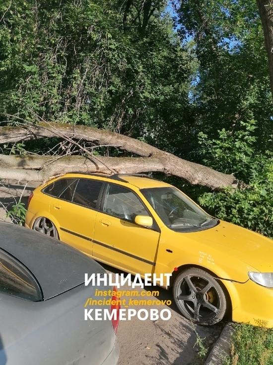 Дерево упало на автомобиль в Кемерове