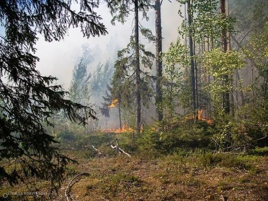 Площадь лесных пожаров в Карелии превысила 7200 га