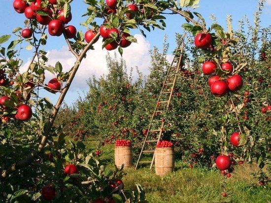 Белгородские фермеры получат гранты на развитие своего дела