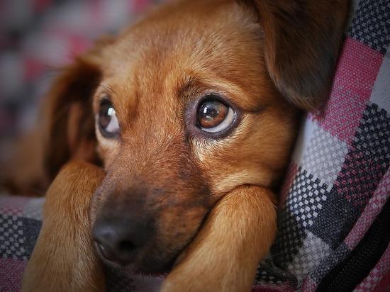 Калужский суд вынес приговор живодеру, забившему двухмесячного щенка