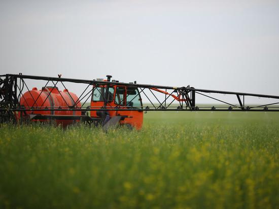 В Волгоградской области на 11% подешевела морковь за неделю