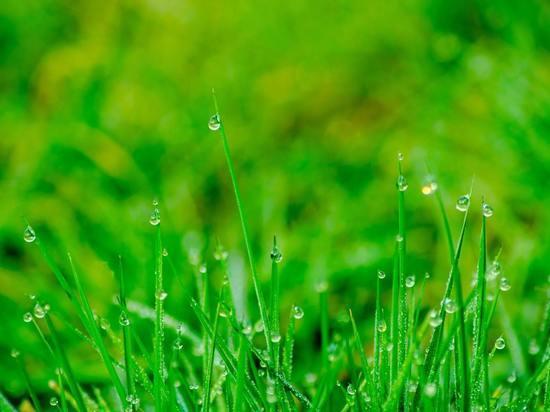 В Курской области 22 июля ожидаются дожди, грозы и +26 градусов