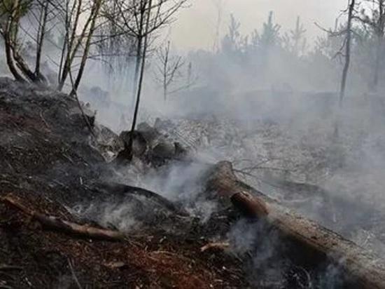 В Ярославской области начали гореть торфяники