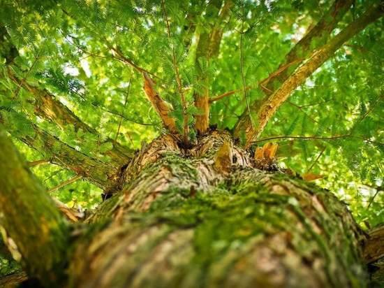 В Краснодаре обследуют и пересчитают деревья