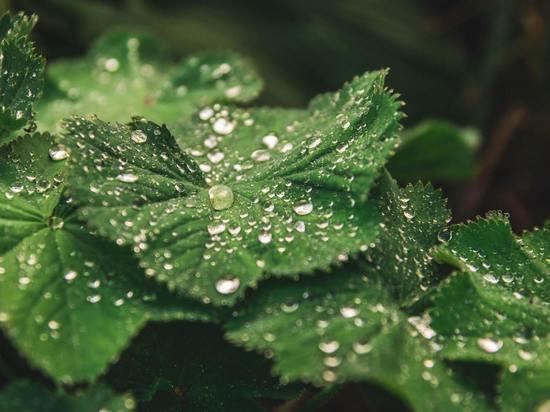 Жаркая погода и кратковременные дожди ожидают амурчан в последний день рабочей недели