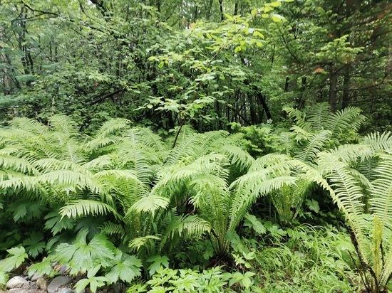 Наблюдение за растениями в Бурятии подтвердило глобальное изменение климата