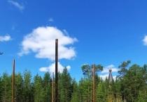 Веревочный парк обустроят для детей в Пурпе