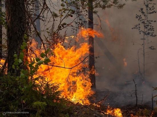 Площадь горящих карельских лесов за сутки увеличилась на 1500 га