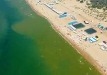 В Анапе зацвело море