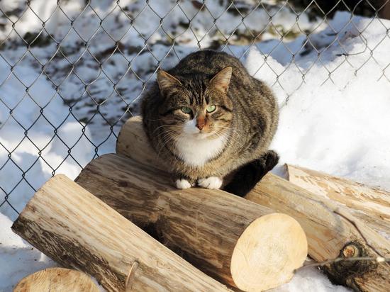 России пригрозили лишением права на ввоз домашних животных в ЕС