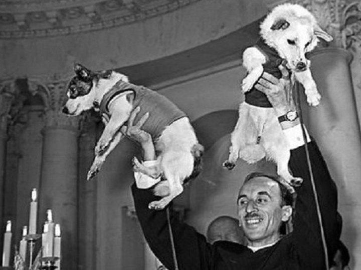 Выяснилось, как две дворняжки разведывали для Гагарина путь в космос