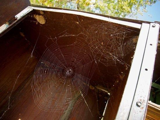 С начала июля участились случаи нападения пауков на волгоградцев