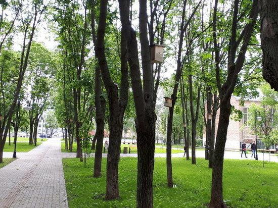 В Ижевске создадут свой зеленый код