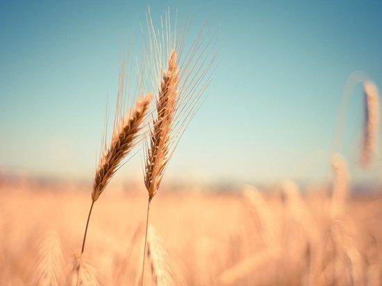 В Удмуртии из-за засухи ввели режим ЧС