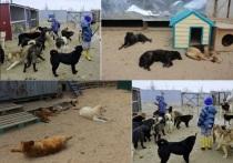 Живодеры кинули кота на растерзание собакам из приюта для бездомных животных в Новом Уренгое
