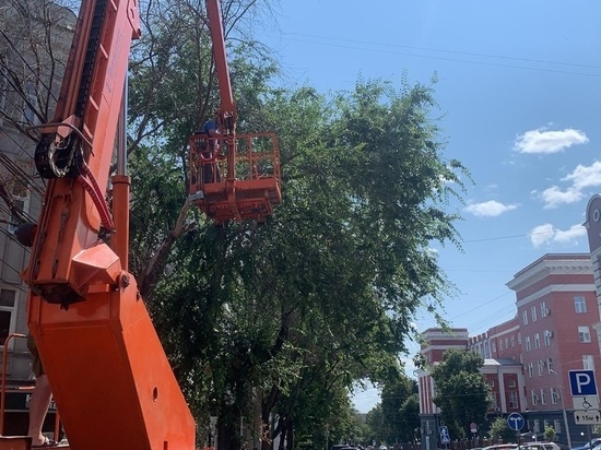 В Курске по 32 адресам обследовали аварийные деревья