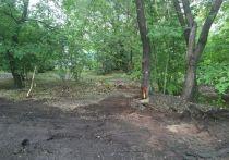 Жители Омска вновь возмутились из-за изуродованных деревьев в Советском парке
