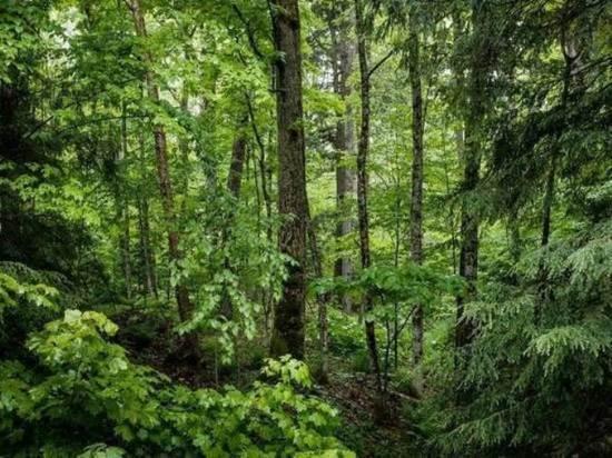На территории Томской области лесных пожаров не обнаружено