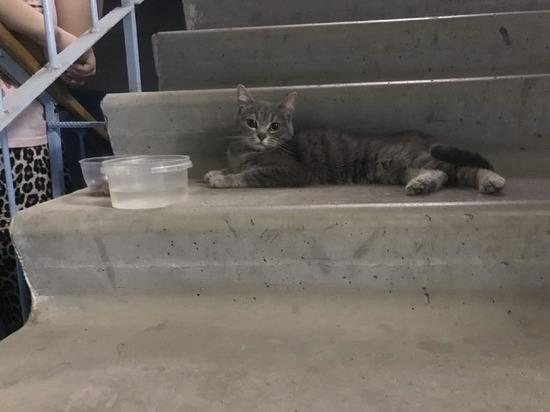 В Волгоградской области ищут новую семью для спасенной кошки