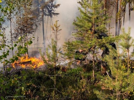 Площадь лесных пожаров в Карелии превысила 10 тысяч гектаров