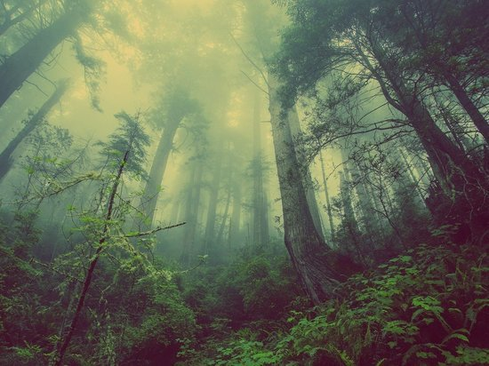 В Кировской области два пенсионера заблудились и сутки кружили по лесу