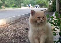 В марте мы опубликовали репортаж из небольшого города на севере Крыма, жители которого жаловались на разбитые дороги и плохое автобусное сообщение