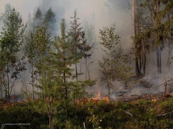 Лесной пожар перекинулся из Карелии в Финляндию