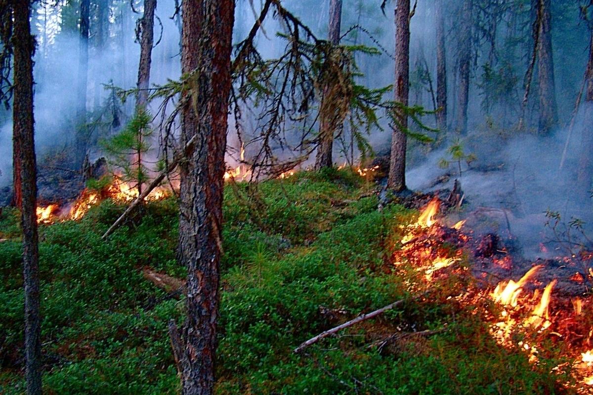 Костромские пожары: несмотря на прошедшие дожди очаг огня в Кологривском районе продолжает увеличиваться
