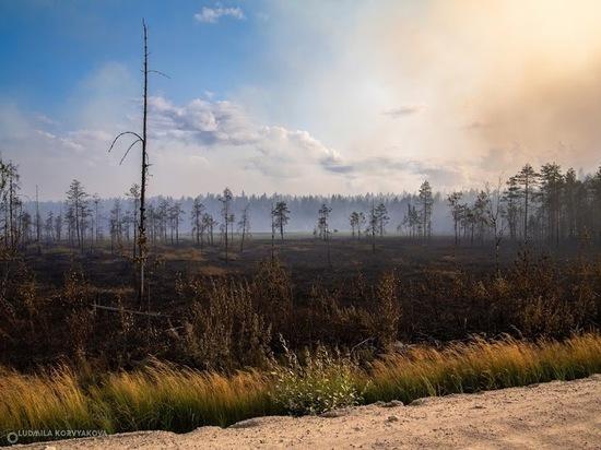 Площадь лесных пожаров в Карелии выросла до 11 тысяч га