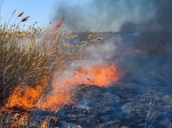 МЧС: три пожароопасных днях ждут Волгоградскую область