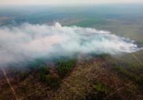 Два пожара потушили в лесах Приангарья за сутки