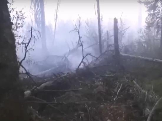 Лес у деревни Большие Горы мог загореться из-за брошенного окурка