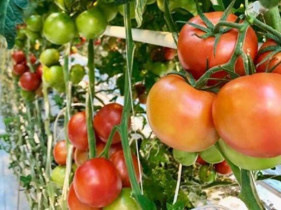 Тюменские сельхозпредприятия расширяют географию поставок