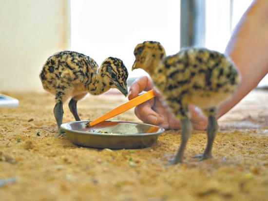 В Московском зоопарке впервые в мире удалось получить потомство этих птиц в неволе