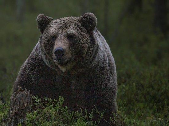 В Карелии из-за пожаров дикие животные подходят к населенным пунктам
