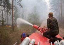 В комитете лесного хозяйства разъяснили, почему отдельные пожары не тушат