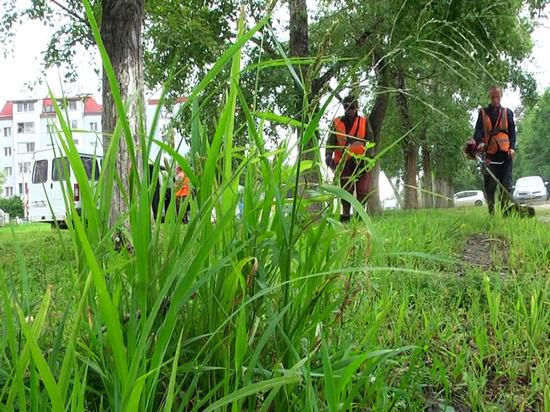 Мэр Благовещенска объяснил, почему в городе несвоевременно косят траву