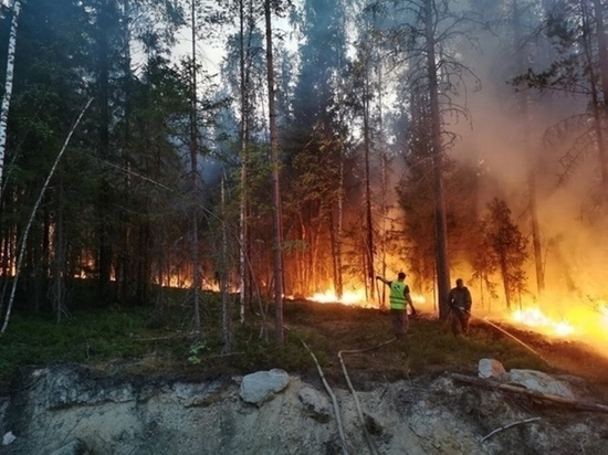 В Минприроды Карелии рассказали, почему площадь лесных пожаров постоянно увеличивается