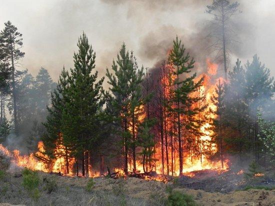 В Марий Эл зафиксировано два лесных пожара
