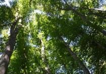 Лес – одно из любимейших мест отдыха наших людей