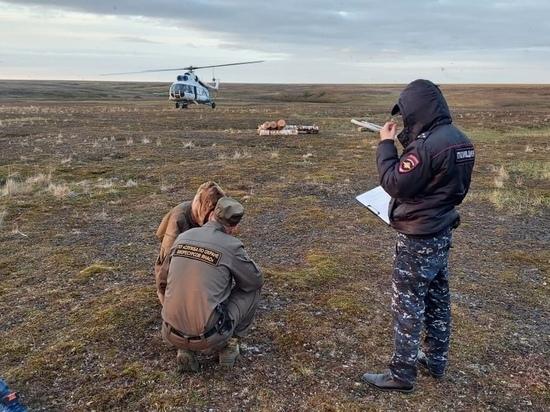 Отгоняли вертолетом: белый медведь вышел к стойбищу тундровиков в ЯНАО