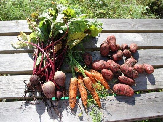 В Карелии создадут рабочую группу по мониторингу цен на овощи
