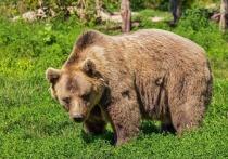 В природном парке «Ергаки» в Красноярском крае произошел очередной случай нападения медведя на людей