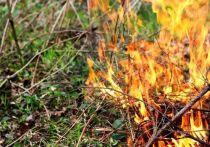 Пожар охватил леса Курортного района Петербурга