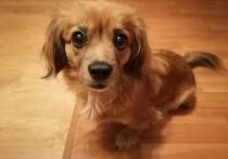 В Александровском районе домашняя собака укусила ребенка